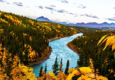 Nenana River In Fall Colors